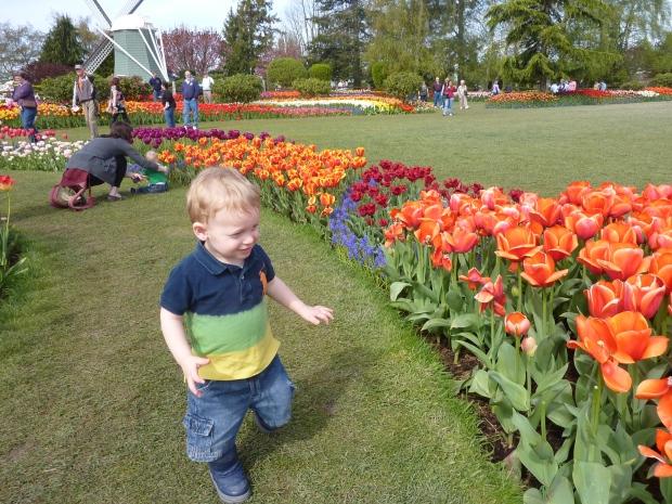 Tulip Festival 2012 - 0022